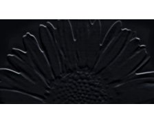 Tubadzin dekor COLOUR Sunflower Black 593x327 mm